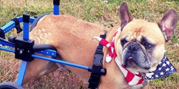 Best Dog Wheelchair 2017 � Buyer�s Guide #pet #pets #dog #dogs #dogwheelchair #doglovers #review #reviews