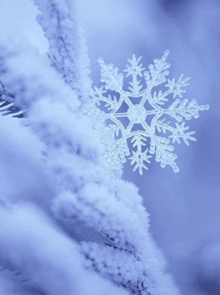 Snowflakes are incredible. God made them to show you how special you are. No one else is like you and no one else can fulfill the plans He has made for you!