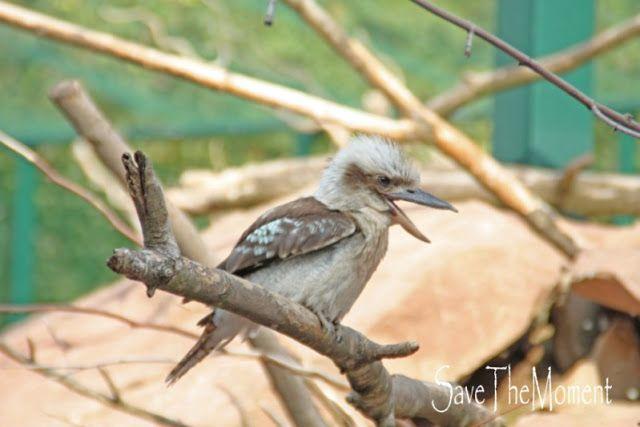 Jolinas Welt: Der Tiergarten Worms Lachender Hans