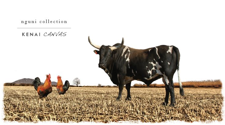 You can also browse our categories for our images and artwork as taken by some of best photographers we could find. There are also some excellent composite images to feast your eyes on! See here → http://www.kenaicanvas.co.za/the-nguni-collection/ #nguni #KenaiCanvas