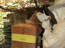 Bee smoker - Wikipedia, the free encyclopedia