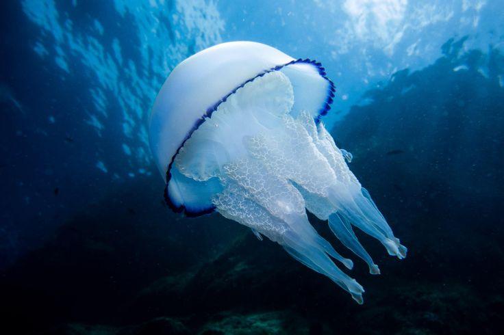 Diving Club ecosostenibile Calabria:Tirrenian