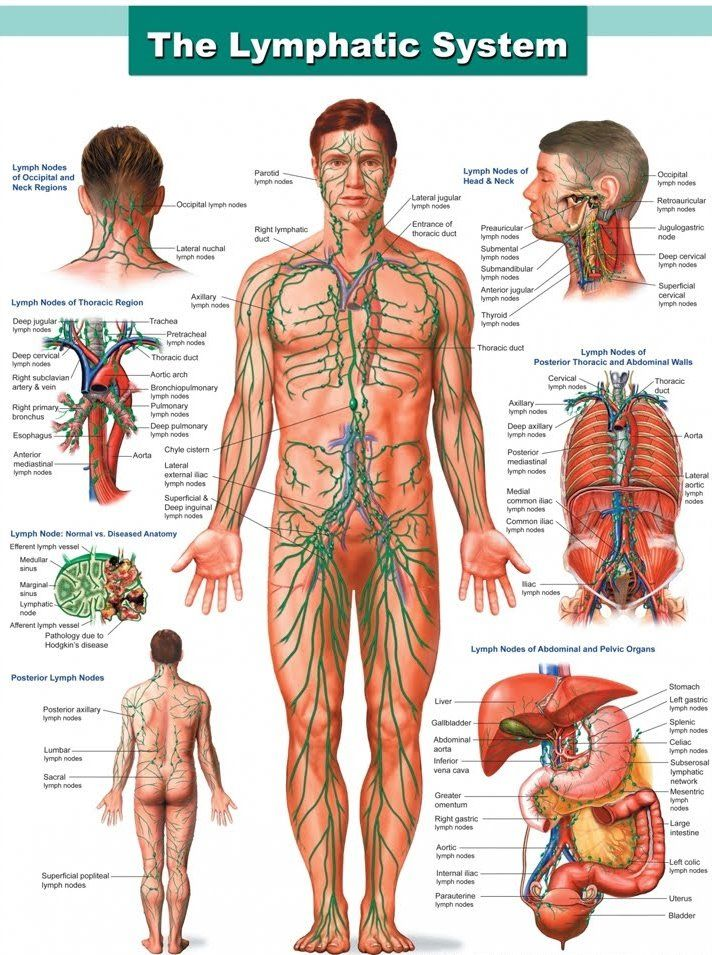 57 best images about body parts affected by autoimmune diseases on, Muscles