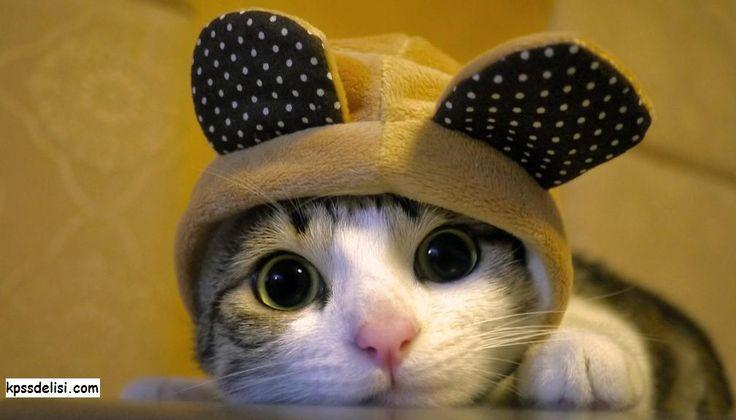 Kedi Resimlerinden komik kedi resimleri, en güzel yavru kedi resimleri, tatlı yavru kedi resimleri, en güzel kedi resimleri, dünyanın en güzel kedi resimleri, kedi türleri.. Tüm kedi resimlerine aşağıdaki bağlantıdan ulaşabilirsiniz. #cat  http://kpssdelisi.com/kedi-resimleri/