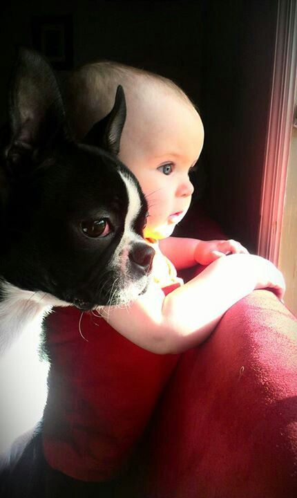 Friends - baby and dog
