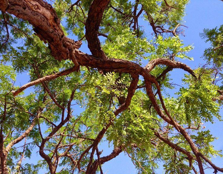 Azávre do parque  . . . . #natureza #igersbsb #árvoresdebrasília #saved #brasília #naturelovers #parquedacidade