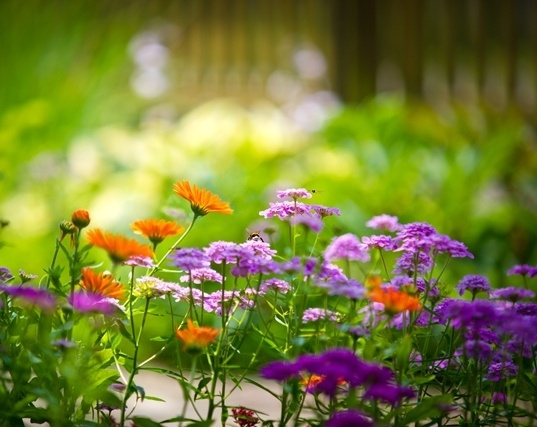 Gardening 101: Part Sun? Part Shade? What Does it all Mean?