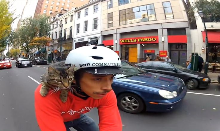 "Where do you want to go today, my feline friend? Join Rudi Saldia and his cat, MJ, for a day of biking and cuddling through Philadelphia, PA. For more Rudi and MJ: http://mylifeatspeed.com/cool-cat/ Music The Octopus Project, ""Korakrit"" Buy at:"