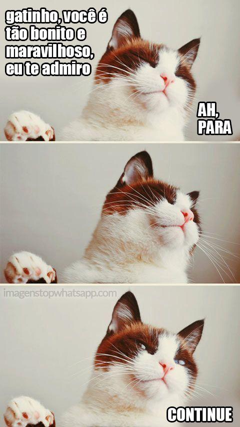 casa para gatos de rua - Pesquisa Google