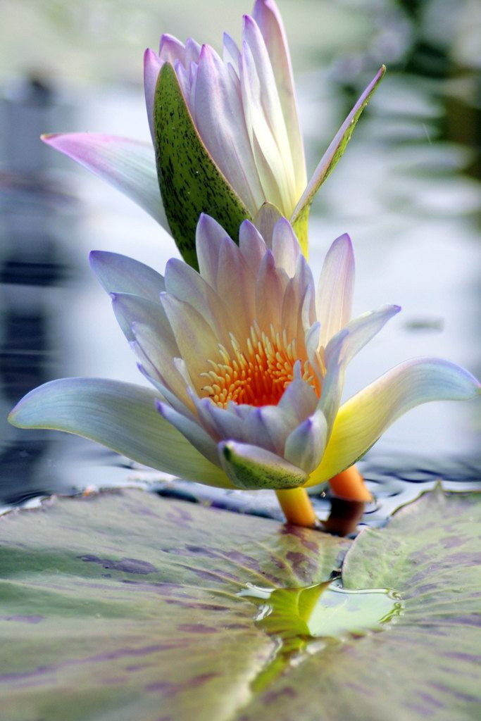 New to aprilbernphoto on Etsy: Waterlily Photography Waterlily Photo Flower Photography Floral Photo Floral Print Nature Photography Landscape Photography (15.00 USD)