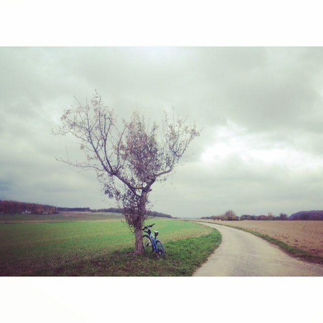 #fromwhereiride #autumn #justaroundthecorner #enjoyeverymile #enjoyeveryride #cyclingmemories #enzkreis #stravaphoto #trek #trekbikes #myeoft by velogram