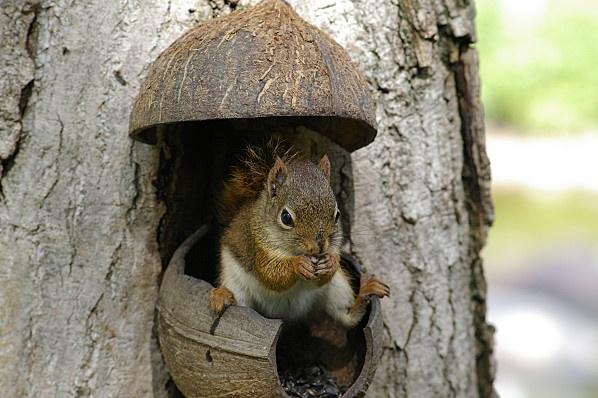 Squirrel house - Cabane d'écureuil