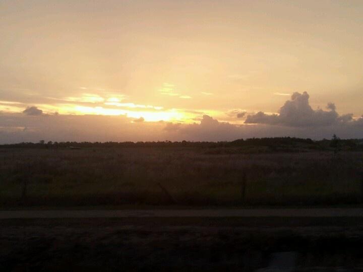 Sunset over the cane fields. Bundaberg, Qld.