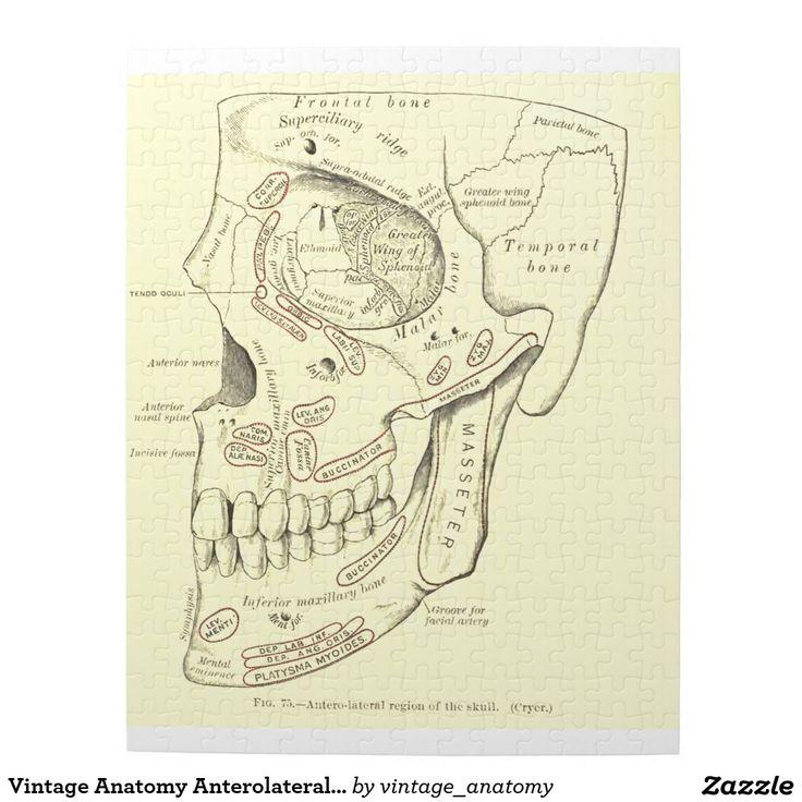Ziemlich Anatomie Puzzle Ideen - Menschliche Anatomie Bilder ...