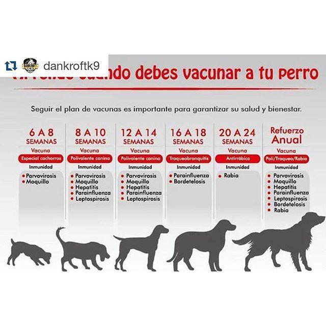 #PerritoFamilia Aprende sobre el plan de vacunación de tus perrit@s  __ 📝 🌟Plan  de vacunación ...