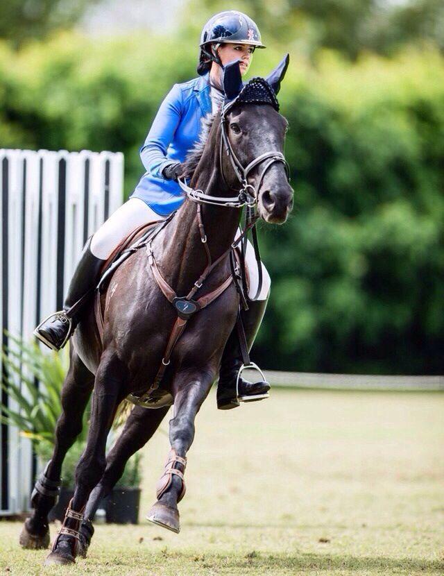 equestrian show jumping | black jumper | cheval noir | blue show jacket