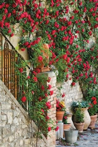 You Can T Get Much More Romantic Than A Red Rose Bush