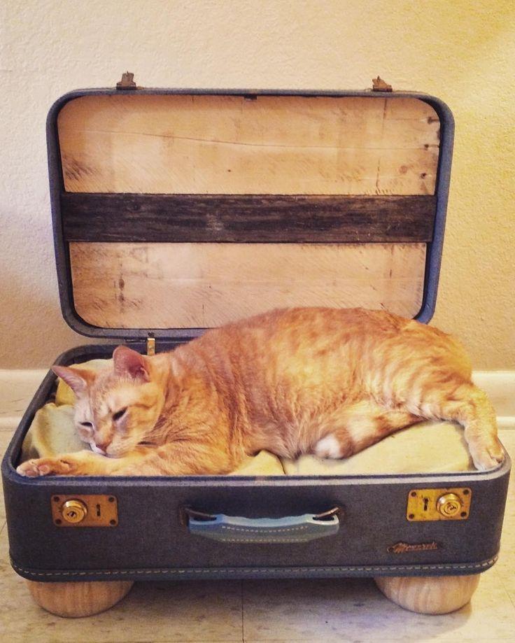 #galleria_arben желает всем сладких снов @alexis_gene #decorideas #decor #interior #cat #чемодан #выходные #вдохновение #котики #рыжийкот