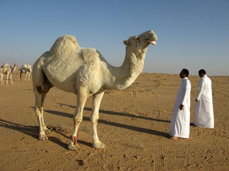 El calentamiento global volverá inhabitable a Medio Oriente - http://www.meteorologiaenred.com/calentamiento-global-volvera-inhabitable-medio-oriente.html