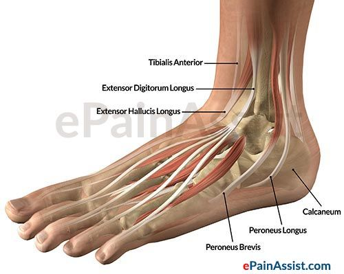 Pin On Ankle Anatomy