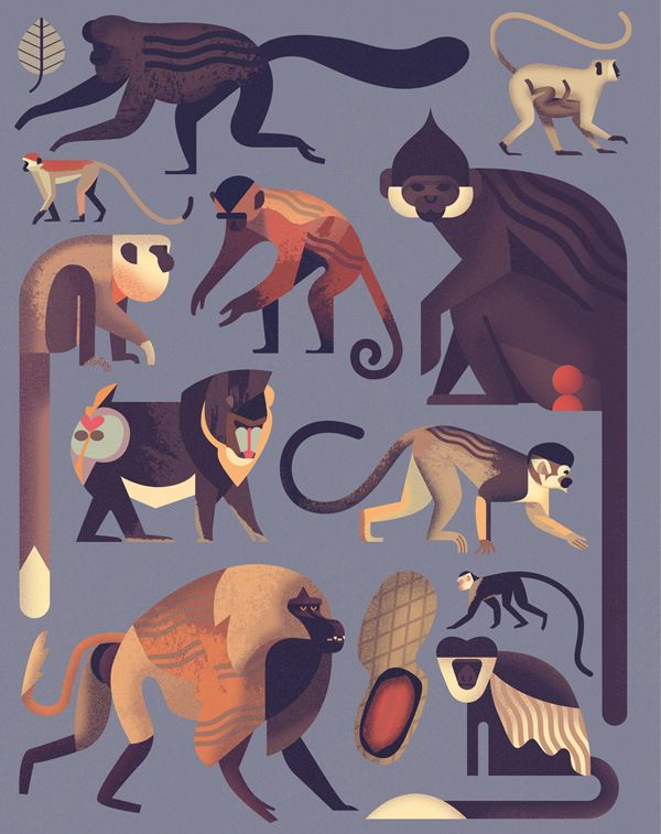 """theolduvaigorge: """" Mad About Monkeys: A Loving Illustrated Encyclopedia of Weird and Wonderful Kindred Creatures """"A captivating primer on our fellow primates, from belligerent baboons to brilliant..."""