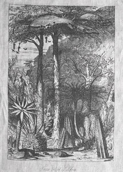 Trees of SA 1 260x150cm