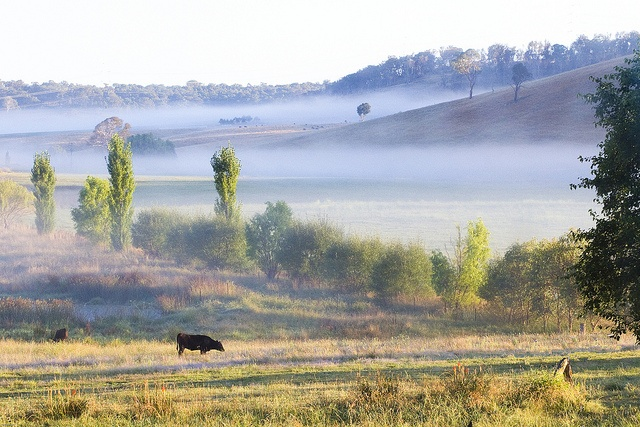 Any time people think of central NSW they hope there will be cows, right? The AYO String Quartet will be in residence at NECOM in gorgeous Armidale from the 7th of October.