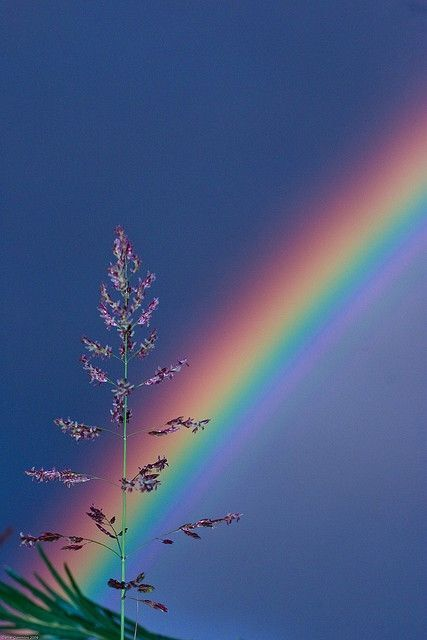 The Perfect Rainbow God always with Rainbow Nature God are always be Wonderful & Fantastic. ❤