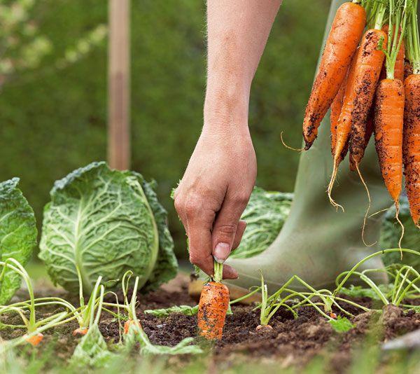 Ako získať z malej záhradky veľkú úrodu | UROBSISAM.sk