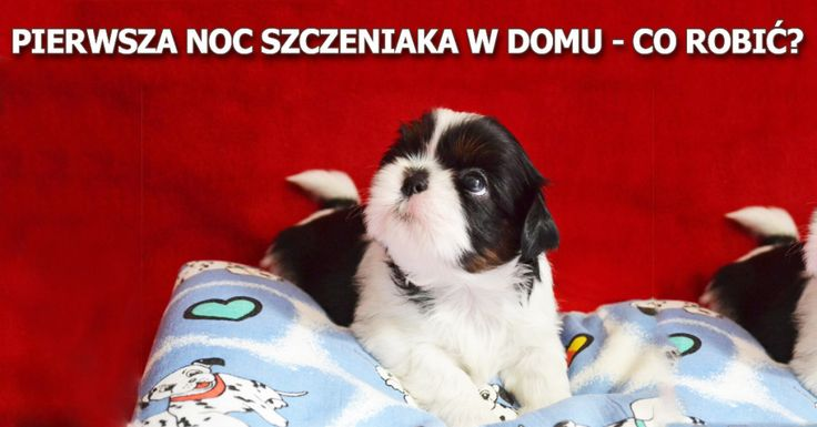 jak spędzić pierwszą noc ze szczeniakiem po zabraniu go z hodowli do domu? lub po adopcji psa? pierwsza noc szczeniaka w nowym domu może być trudna do przeżycia dla psa, tzn. bardzo stresująca, dlatego warto wiedzieć jak to rozwiązać http://www.szkola-doberman.pl/szkolenie-psow/pierwsza-noc-szczeniaka-w-nowym-domu-co-robic/