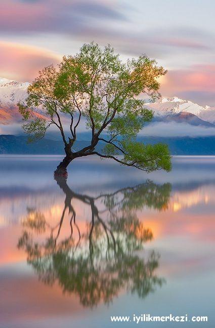 Günün Olumlaması: Ben, beni yaratan mükemmel gücün bir yansımasıyım. Tam da olduğum gibi sevilmeyi hakediyorum. Kendimi, seviyor, beğeniyor ve onaylıyorum. Sevgiyle güvendeyim ... #gününolumlaması #bybegumkarace #iyilikmerkezi #hergün #iyigelir #tekraret #mükemmel #yansıma #29122015 #hakediyorum #sevgi #güven