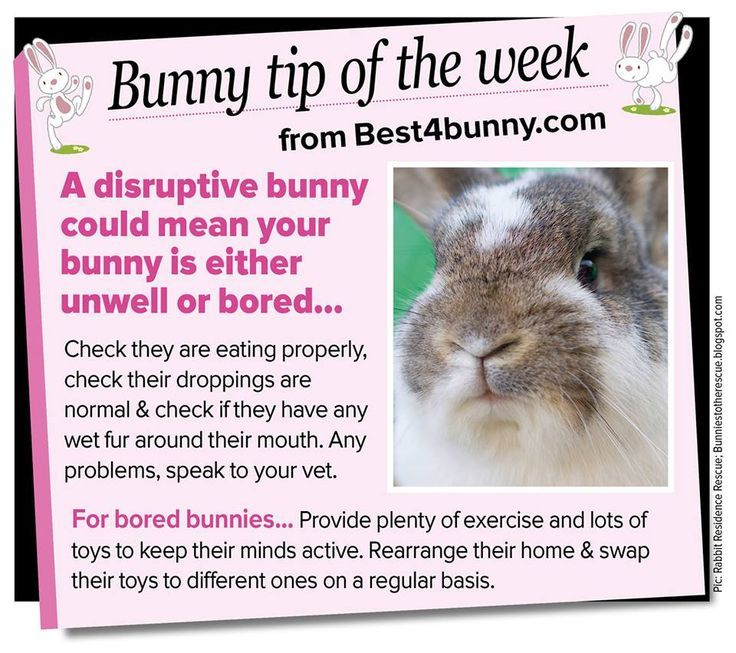 Bunny Tip Of The Week Reasons Why A Rabbit Is Being Disruptive