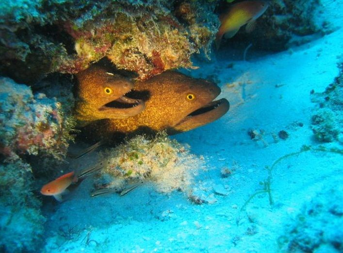 The arabian sea fish species under the sea pinterest for Ocean fish species