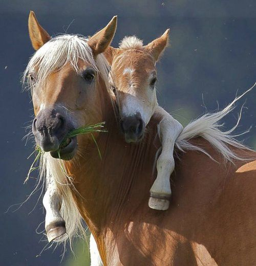 Horsey back ride!!!