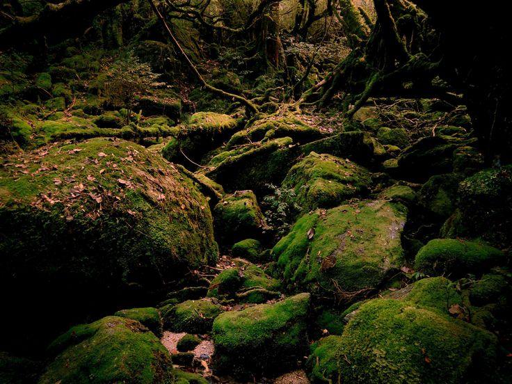 In Kürze - soon: 屋久島 Yakushima: ein Reisebericht - a travel report.