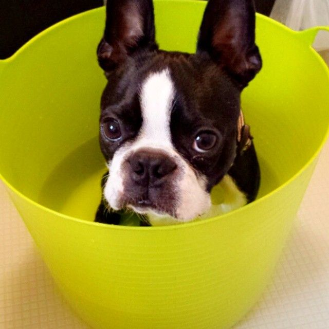 Everyone has a bucket list. Some, maybe just a bucket.