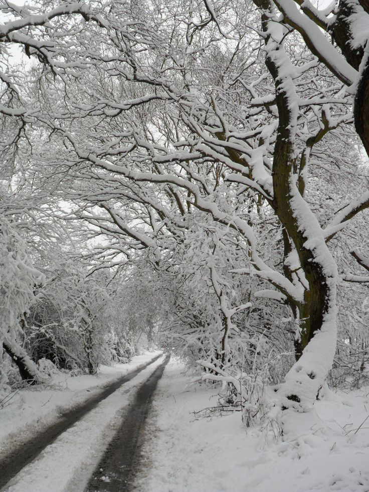 Snow covered trees at Hobs Hole Lane today,Aldridge, Walsall, England (All Original Photography by vwcampervan-aldridge.tumblr.com) — FUCKITANDMOVETOBRITAIN