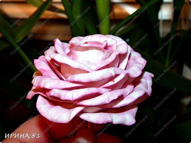 Здравствуйте! Сегодня представляю Вам Мк по созданию чайно-гибридной розы из…
