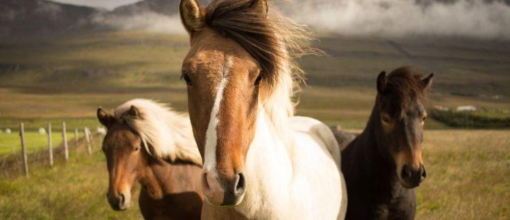 Digital Horse Magazine