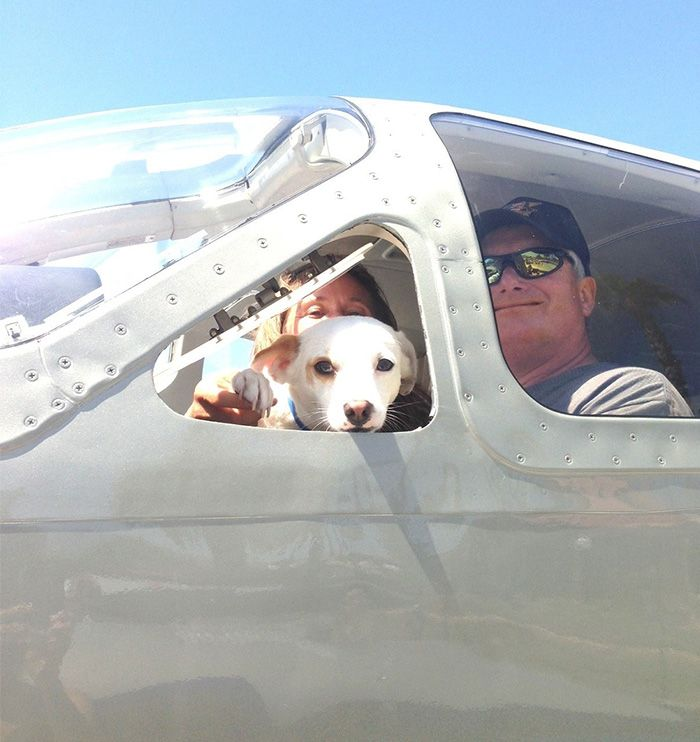 Wing Of Rescue - Pilots Flies Dogs To New Homes To Avoid Euthanasia