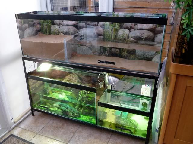 Pics of Turtle Tanks!!?? | Pet Forums Community