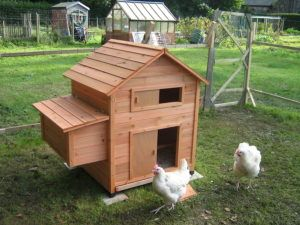 A chicken coop inside a run complete with chickens!