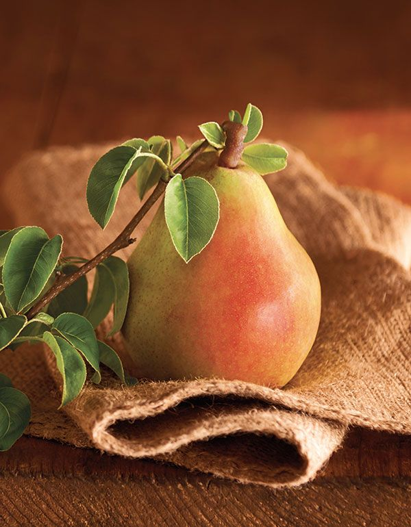 Tips and Tricks on How To Ripen Pears, plus some pear recipes once they are ready to eat!
