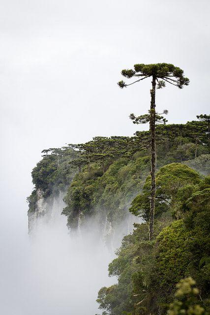 Serra Geral National Park, Brazil / Brésil chic ! Concours GLAMOUR