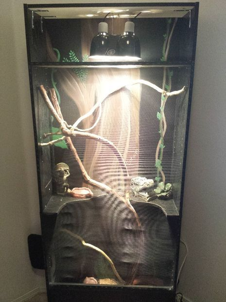 Picture of Turning a bookshelf into a lizard habitat.