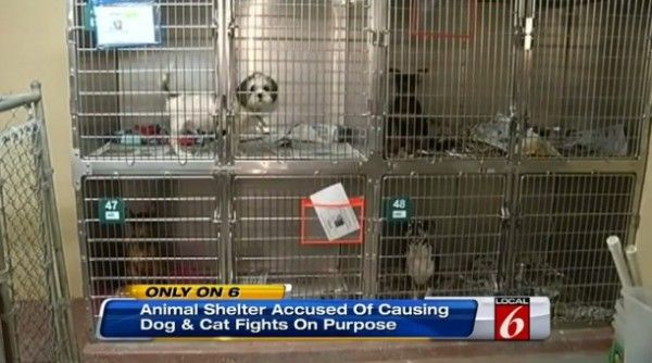 Close Florida animal shelter that caused dogs and cats to fight on purpose!