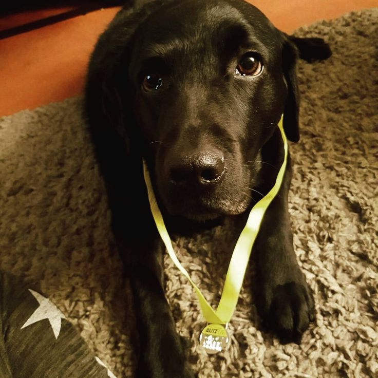 First run of the year done. Not a great one this time - rain wind and hailstones! However managed to shave 1 minute off my time  #blitz #glowrun #glowrun5k #5k #nightrun #runner #medal #dogsofinsta #running #Bournemouth #gettingthere