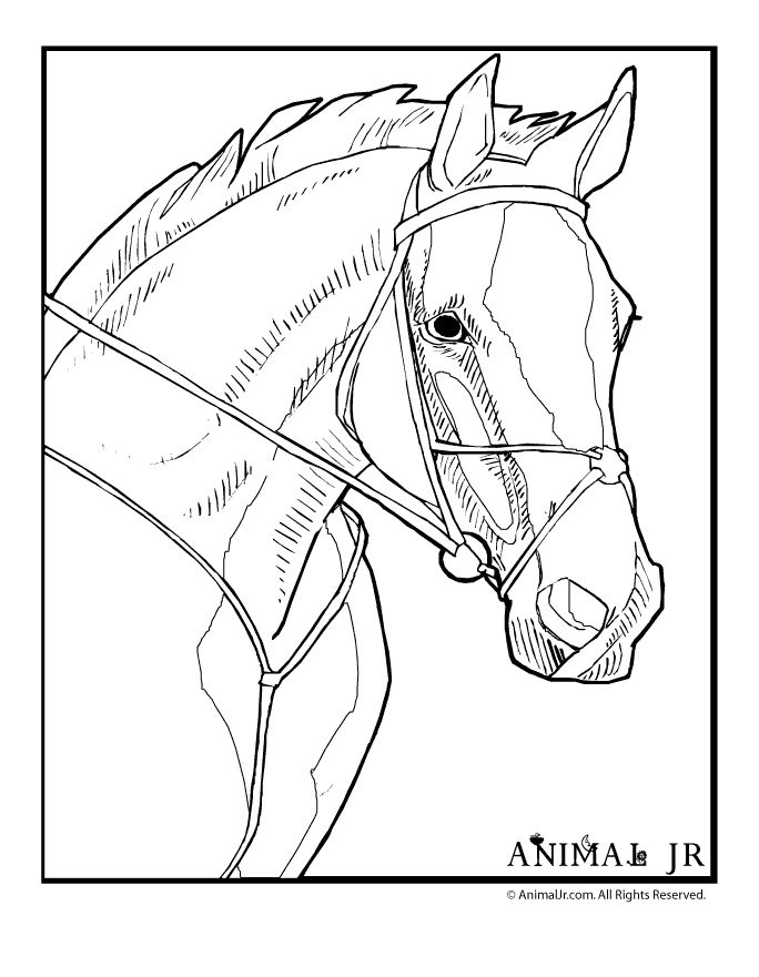 image detail for horse coloring pages horse coloring page 1 classroom