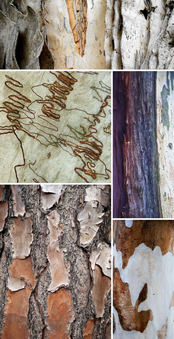 Bark textures that are amplified through aging and weather decaying the tree.
