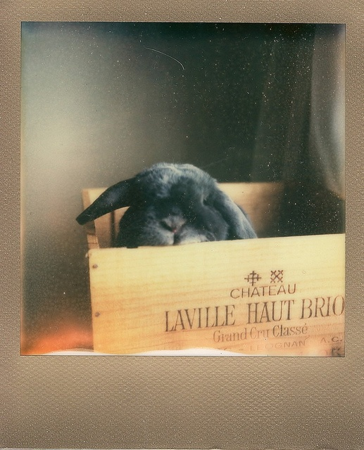 By rabbitierGallery Photos, Polaroid